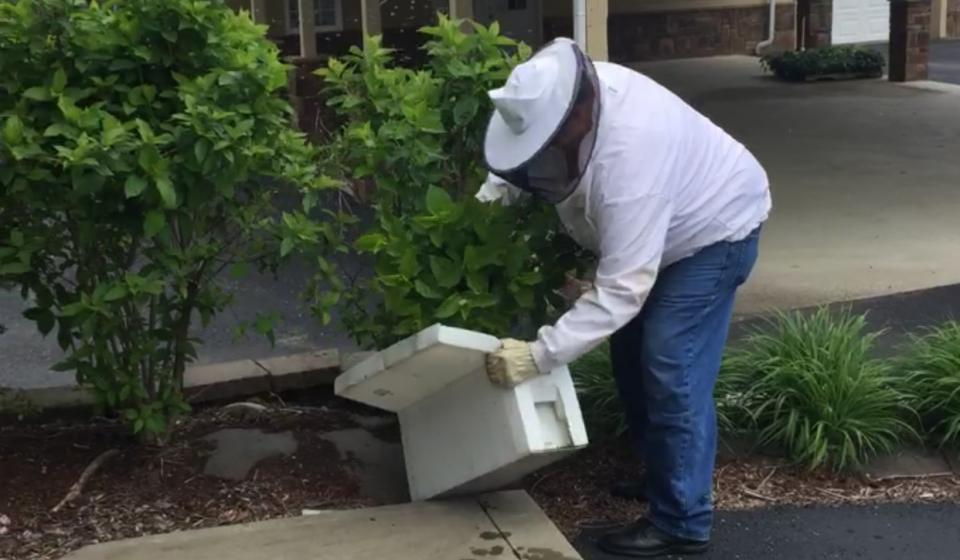 Click here for more info about Beekeeping